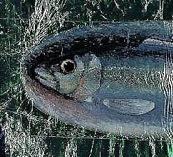 federico fellini,littérature autobiographique,blog littéraire de christian cottet-emard,poisson,alliés substantiels,sardine