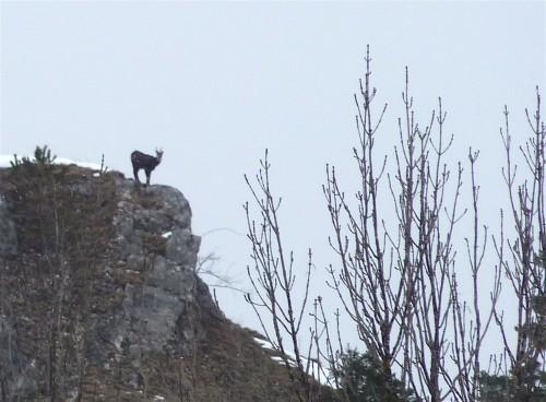 nature,campagne,montagne,chevreuil,blog littéraire de christian cottet-emard,photo,zoom,crêt,jura