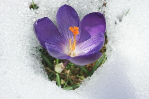 colère,froid,blog littéraire de christian cottet-emard,carnet,note,journal,christian cottet-emard,crocus,neige