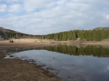photo,carnet photo,balade,promenade,nature,forêt,lac,blog littéraire de christian cottet-emard,campagne,christian cottet-emard,jura,franche comté