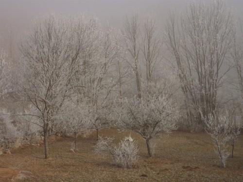 Noël, poésie, campagne, neige, nature, promenade, rêve,blog littéraire de christian cottet-emard,nativité,douce nuit,joseph est bien marié