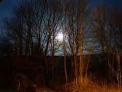lune,clair de lune,bonne étoile,nuit,scène nocturne,fenêtre,chance,orme,frêne,chat,renard,christian cottet-emard,blog littéraire,poésie,carnet