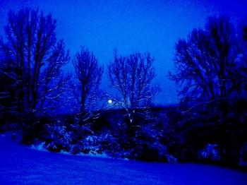 hiver,insomnie,poèmes du bois de chauffage,éditions orage-lagune-express,blog littéraire de christian cottet-emard,oiseaux,nuit,arbre,bois,lune,forêt,rêve