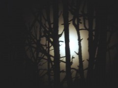 carnet,note,journal,prairie journal,nocturne,nuit,grande ourse,étoile,ciel,obscurité,sommeil,hypnagogique,blog littéraire de christian cottet-emard,littérature,écriture de soi,autobiographie,lampadaire,halo,ombre