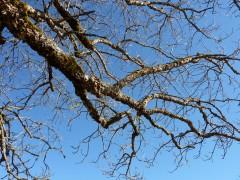 arbre,parking,usine,caserne,stade,littérature,blog littéraire de christian cottet-emard,poésie,récit,note,carnet,journal,ébauche