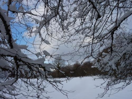 blog littéraire de christian cottet-emard,photo,image,promenade,paysage,hiver,nature,forêt,bois,arbres,chemin,neige,chat,campagne,saison,raquettes,lichen,herbes folles,sous-bois,troncs d'arbre
