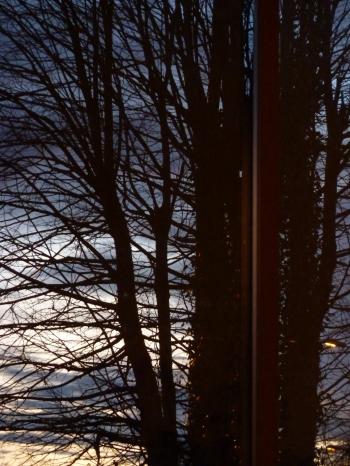carnet, note, journal, autobiographie, écriture de soi,prairie journal,blog littéraire de christian cottet-emard,pâquerette,rose,cosmos,souci,anémone pulsatille,calcaire,chat,chocolats voisin,fruits confits voisin,anniversaire,vieil ado,macbook,luminothérapie,instant