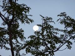 lune,matin,poésie,récit,frêne,éditions orage-lagune-express,droits réservés,blog littéraire de christian cottet-emard,récits des lisières,lune dans les frênes